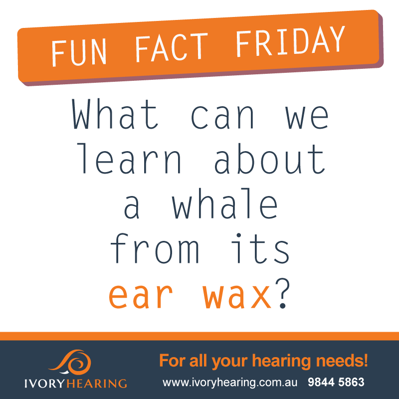 fun fact friday - whale ear wax