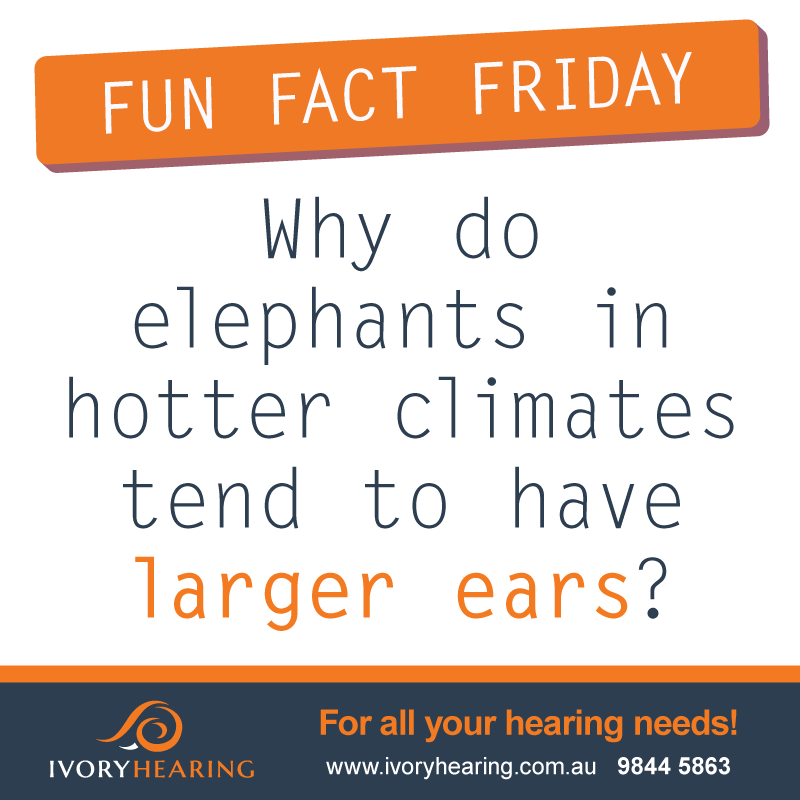 FunFactFriday-elephants-ears